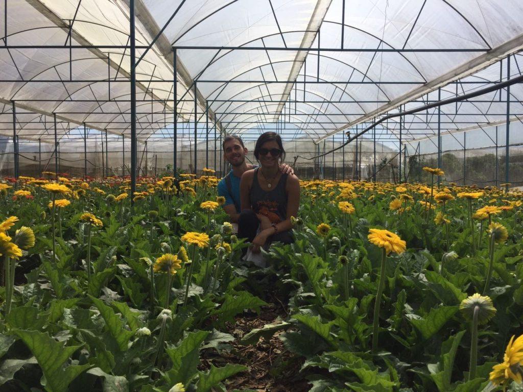 חממה לגידול פרחים בדה לאט